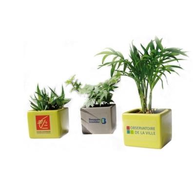 Mini plante publicitaire