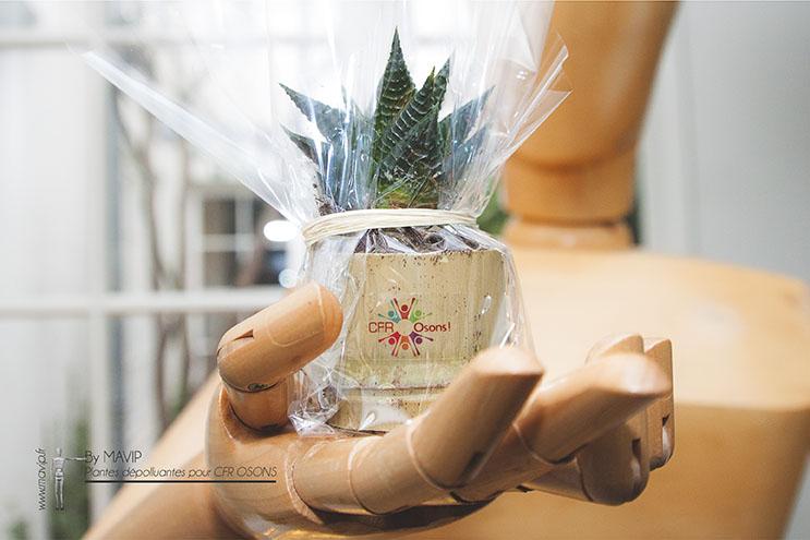 Plantes dépolluantes réalisées pour CFR OSONS par Mavip